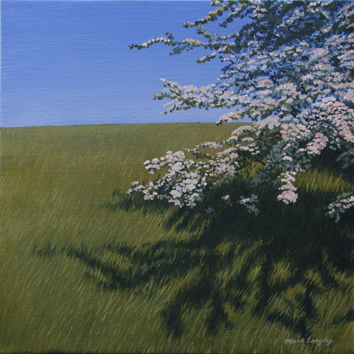 'Hawthorn Blossom' - Oil on canvas not framed by Mark Langley Fine Artist - 30 x 30 cm, 1.5 cm shallow canvas edge £230. Please enquire.