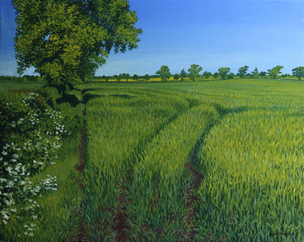 'Tracks Through the Barley' - Original oil painting by Mark Langley Fine Artist 50.5 x 40.5 cm. Landscape local to Quarndon, Derbyshire now in St John Street Gallery, Ashbourne.